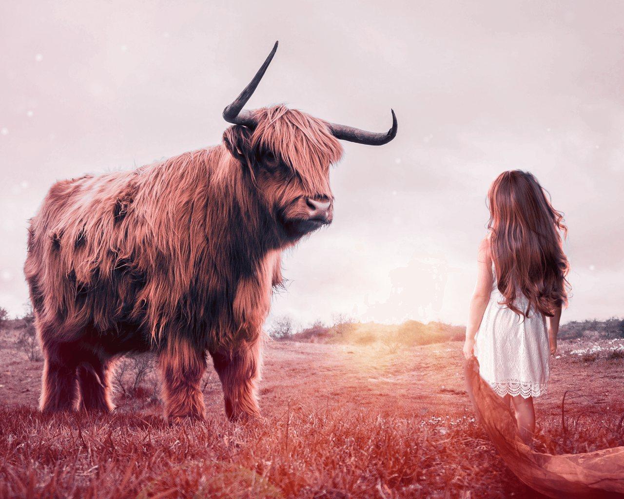 Dziewczynka naprzeciw byka