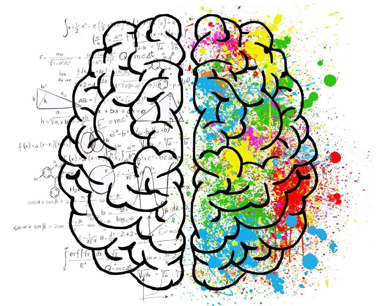Szkic mózgu